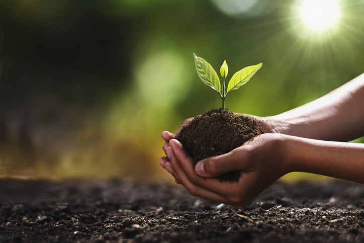 hand holding small tree for planting. concept green world